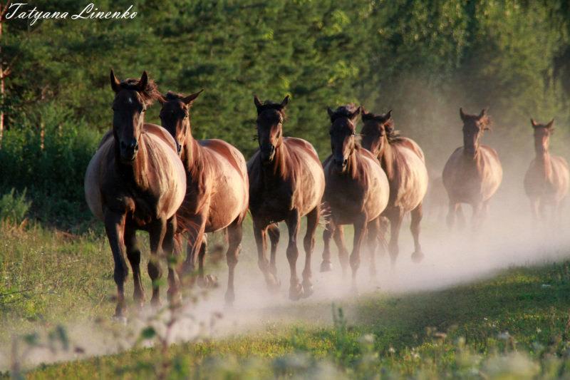 Рязанский конный завод