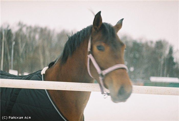 Автор Ася Райская, её первая съёмка на полностью ручной раритетный Зенит,они качественнее,чем на цифровик;) Конь частный, из КСК Эльф