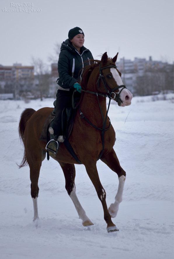 Первая тренировка скаковых лошадей весной. Да, весной у нас и не пахнет. Кобыла Наргиза