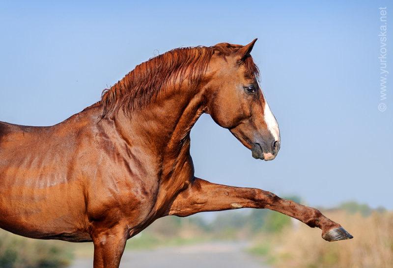 Ukrainian Cossacks Horse Show www.cossacks.kiev.ua
