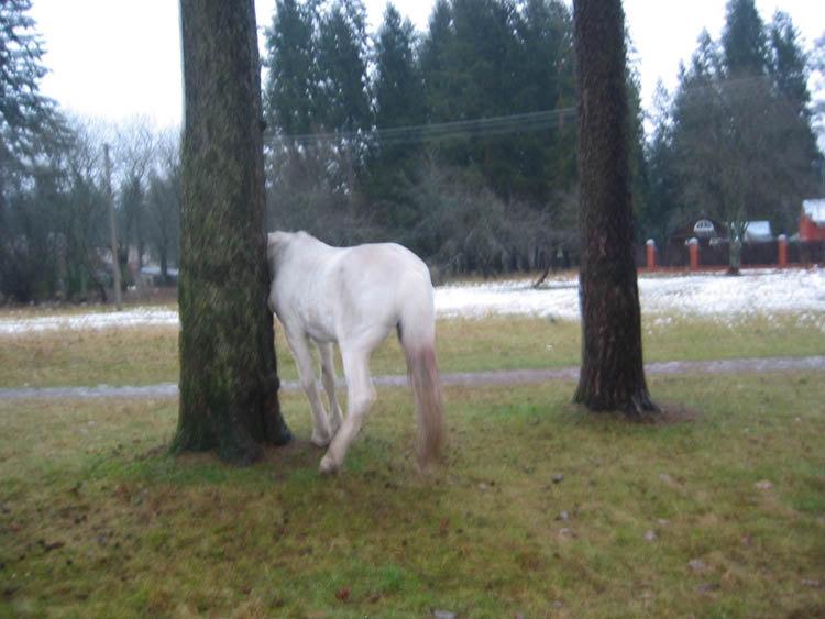 Эльба чешется об дерево