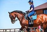 Аренда лошадей и индивидуальные занятия