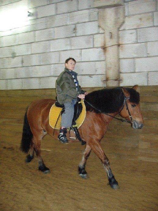 Маша идеальная лошадь для начинающего всадника