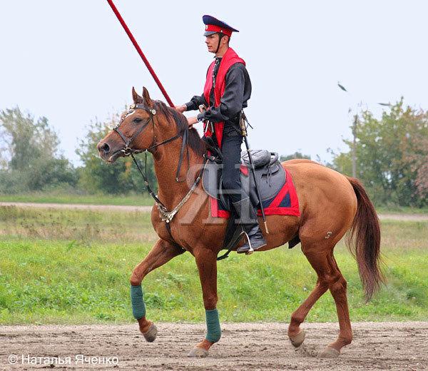 Участник показательных выступлений по военно-прикладным видам конного спорта