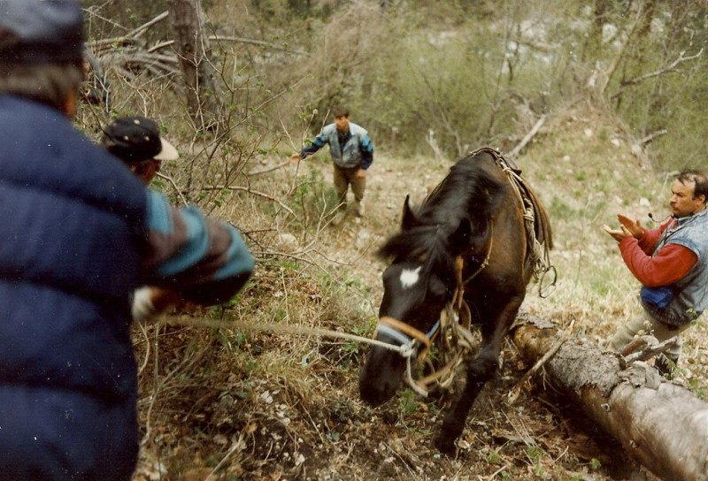 В конном туризме, иногда, лошади движутся без всадников