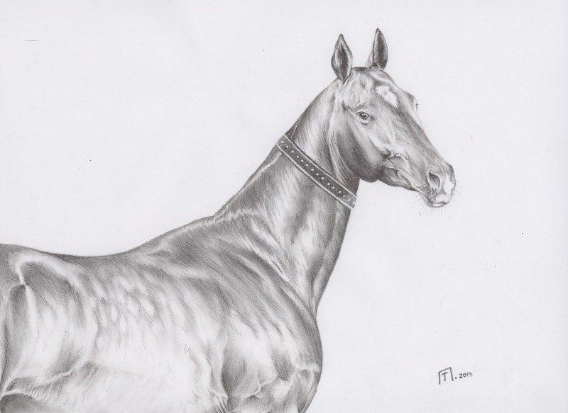 Рисунок по фото из Интернета...Лошадь из Сакской конюшни ( Казахстан, Алматы )