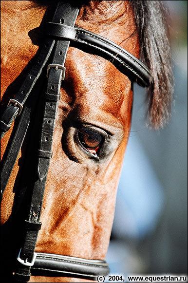 Лошадиные глаза