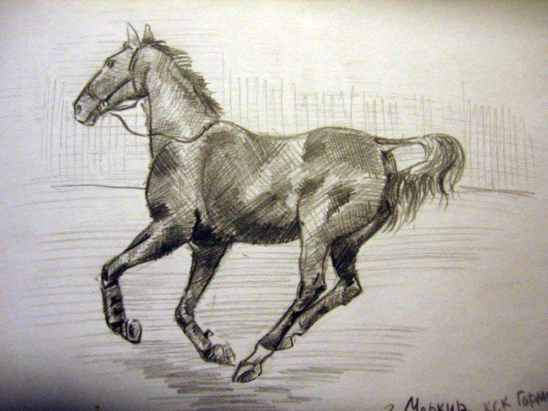 Лошади из КСК Гармония