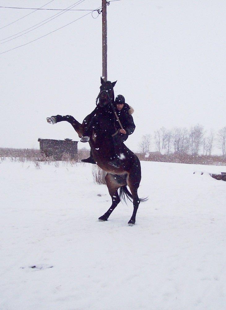 Орловский рысак Момент