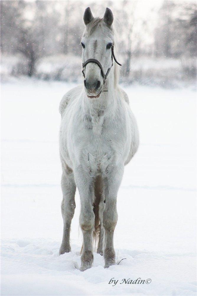 Снежный,любопытный Зайчик)))