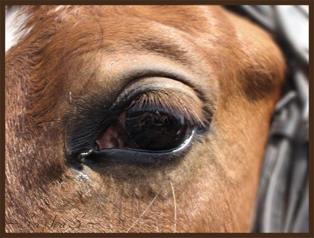 Отражение прыгающей лошади