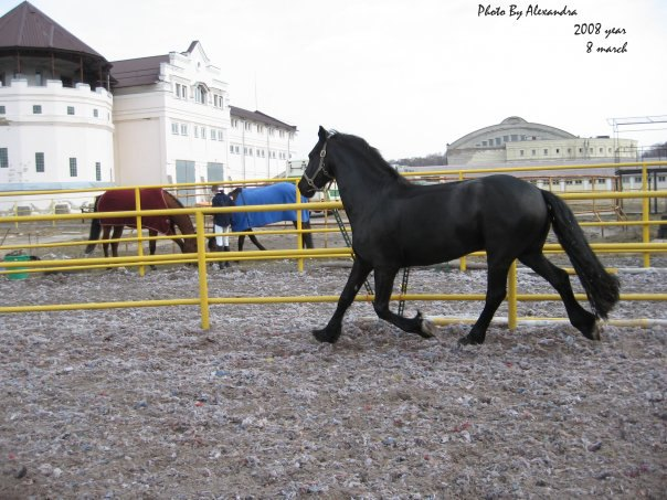 Хозяин лошади: Black Unicorn)