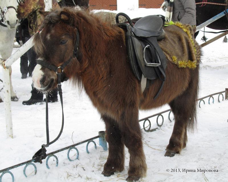 Фауна ледникового периода )))