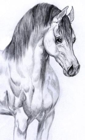 Красивый конь