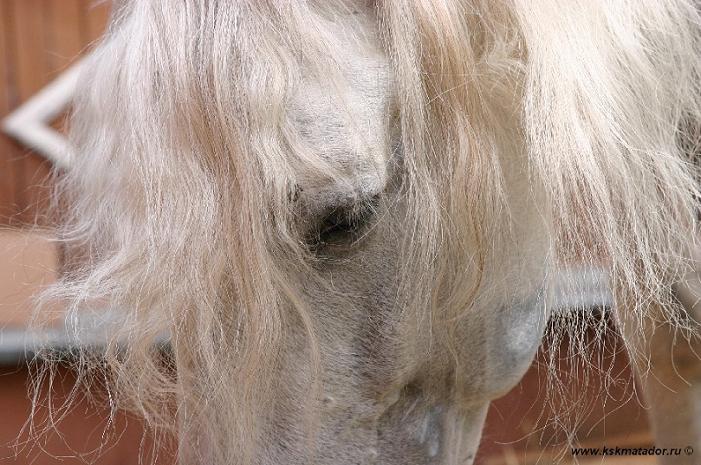 Автор фото-Дарья Никулина.Страдания в глазах лошади...