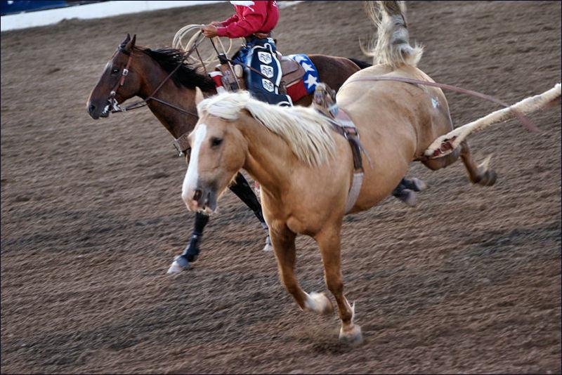 'Flap strap'отстегнут, причем на галопе. Не думаю, чтобы туго затянутую подпругу можно было отстегнуть у рядом бегущей лошади за 3 секунды, как это произошло на фото. Особенно, если бы коню было больно
