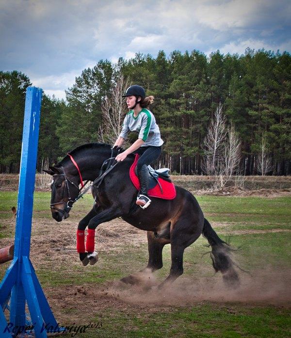 Увидев препятствие,сотворенное во время фантазии тренера,лошадь шуганулась.