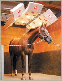 Лошадь в солярии