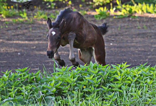 решила что станет конкурной лошадью:)