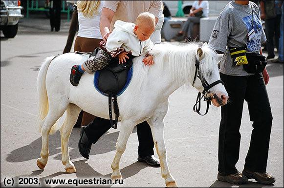 Самая лучшая лошадь - это пони!