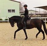 Готовая лошадь с базой: бери и лепи!ЗДОРОВ!