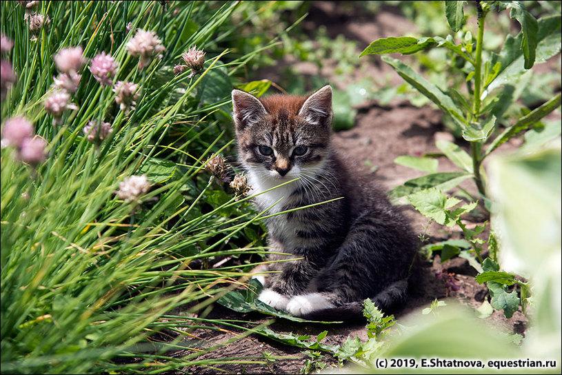 Котик в цветах в КСК Отрада