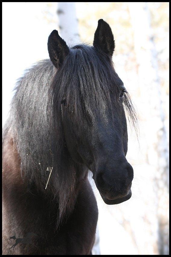 Моя Каришка строит из себя милую и кроткую лошадку :))
