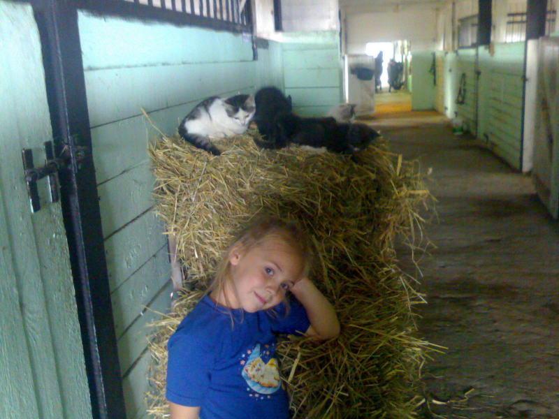 Приобщение ребенка к конюшне