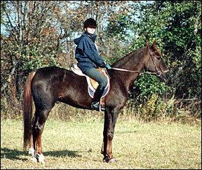 Лошадь хобби-класса