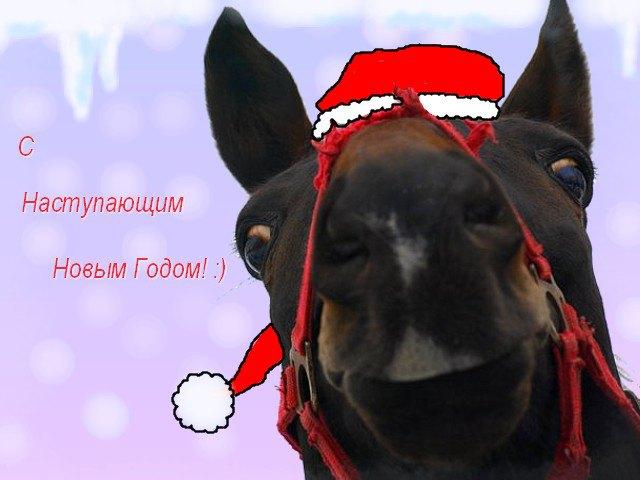 Желаю всем пользователям этого сайта много здоровья, удачи и счастья в новом 2009 году! :) А так-же никогда не забывайте улыбаться, как этот милый конёчек :)