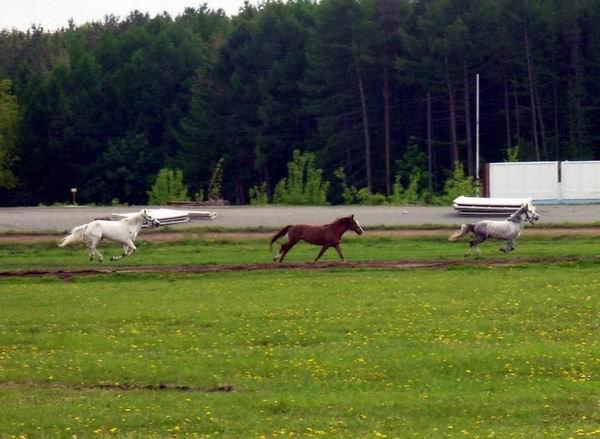 А так наши кони работаются сами по себе...обратите внимание на дистанцию! =)