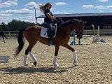 Юношеская лошадь 175 в холке