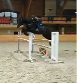 Безопасная лошадь под ребенка в конкур