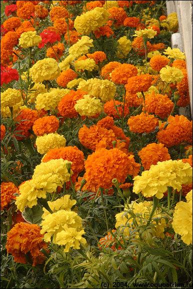 Еще цветочки...