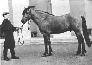 Жер. Протазан (Кусок - Звезда) 1954 г.р. из Балезинского района Удмуртии на ВСХВ в 1958 г.