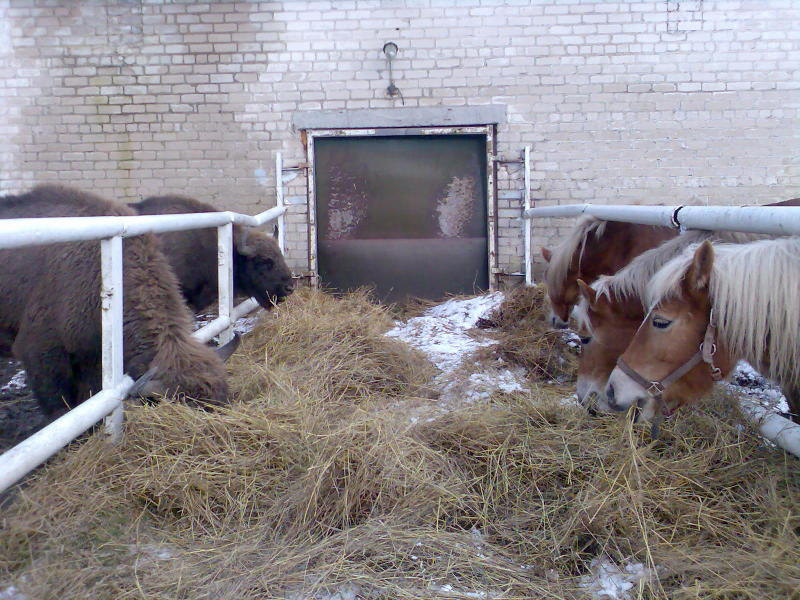 вот такие звери живут у нас на конюшне...