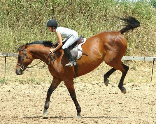 Решили укрепить девчонке ноги пересадив ее с резвых поняшек на  противоположную по характеру лошадку, которая требует крепкои ноги... Так было весь урок, бедное дите почти расплакалась, но не упала:)Это Миленина подружка Сара на Andy