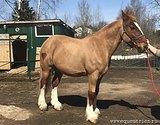 Стрижка лошадей