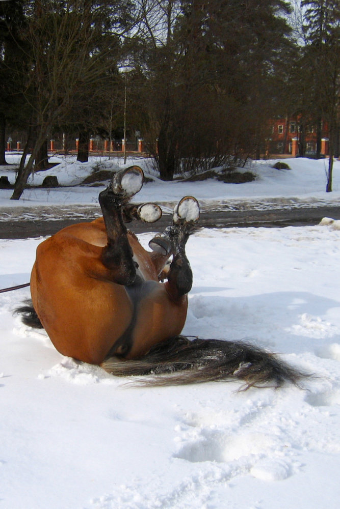 Коню рассказали смешной анекдот...Ржал, никак не могли успокоить :)