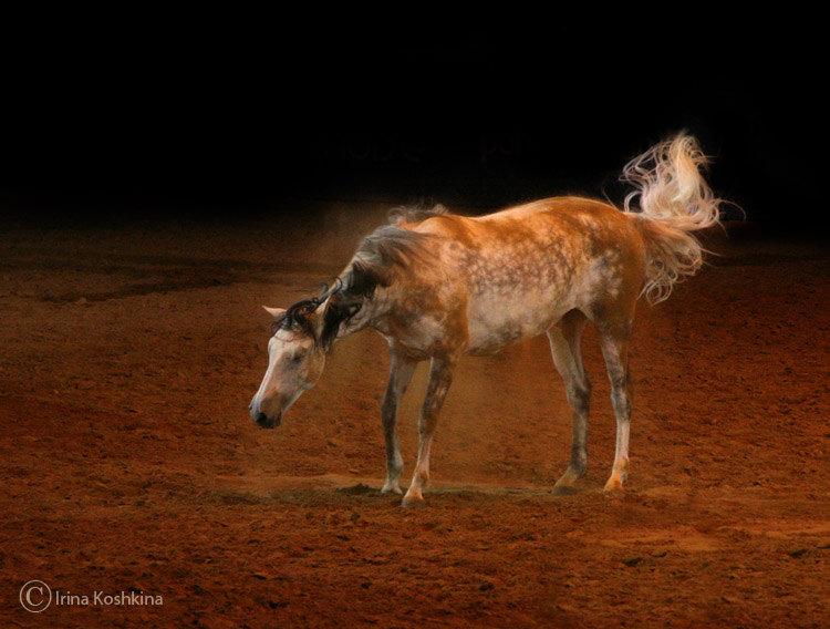 Шоу Лоренцо. Последний день. Одна из лошадок долго и с удовольствием валялась, а потом очень мило отряхивалась от песка :)