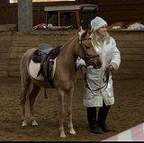 Чистопородная уэльская пони ( Dream Team - Певчая