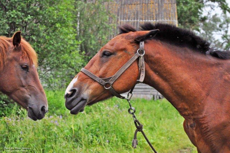 Башкирочка учит Рыжую, как правильно жить :)  Дождливый июнь 2012 год