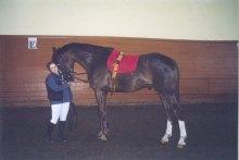 Рубаб, конь продается