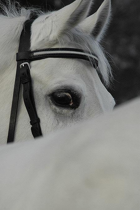 белый и пушистый :-)