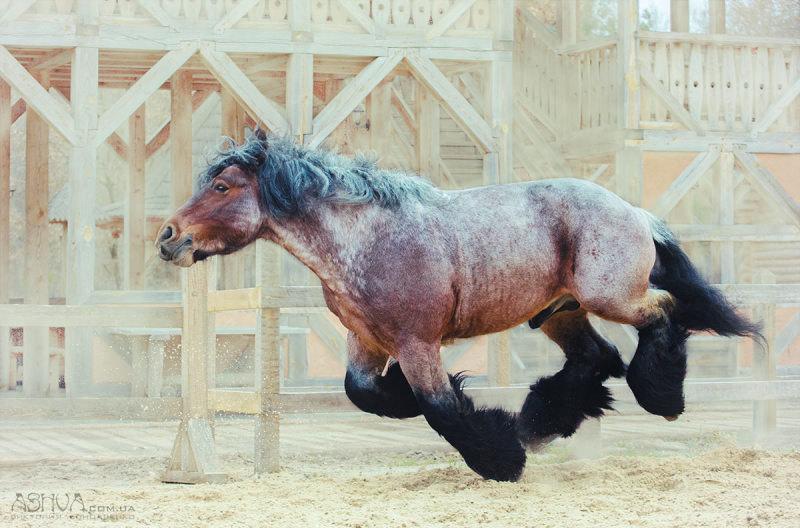 И только лошади летают вдохновенно!)