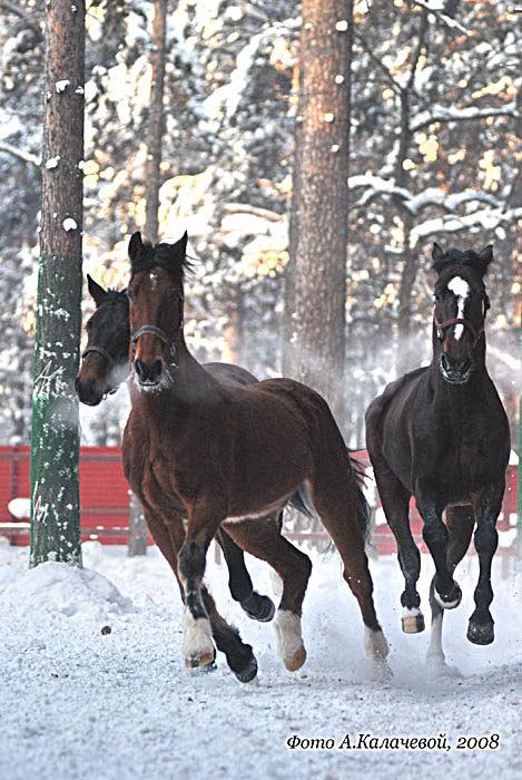 кони на меня несутся...