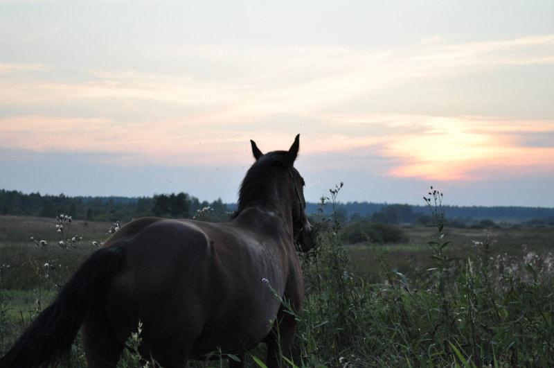 коб.Сильва , фото тёмное т.к. уже было поздно,но красотой заката я поделюсь с вами *_*