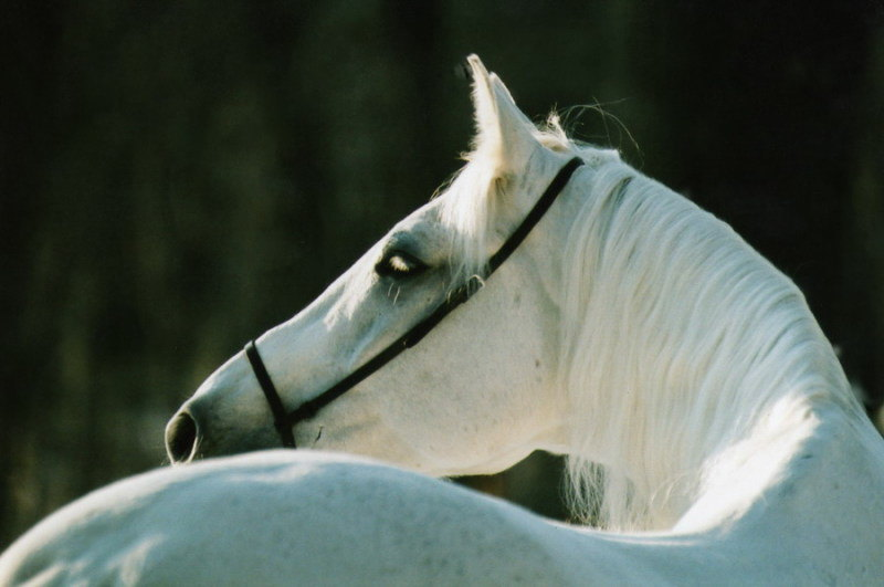Сережа одним ясным воскресеньем... те самые полчаса из жизни лошади...