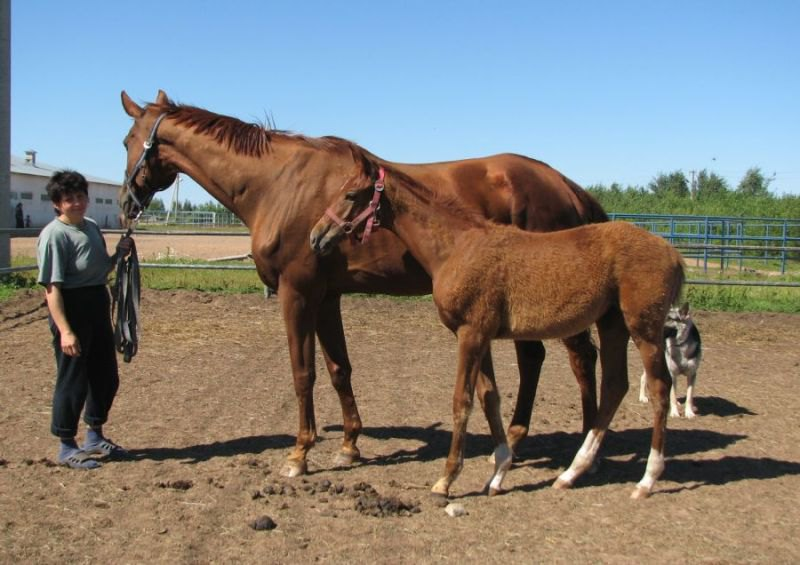 Мама 178 см в холке , малышке 4,5 месяцев...