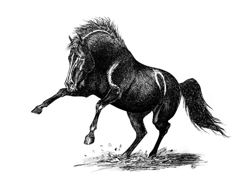 """с """"конного мира"""" срисовывала, вроде это русский рысак  был"""